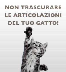 Articolazioni gatto