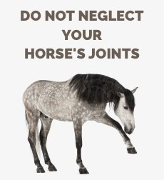 Horse's joints