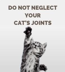 Cat's joints